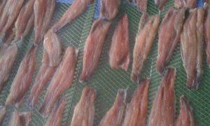 Các loại máy sấy hải sản- CTY TNHH HOÀNG VŨ VINA  liên hệ báo giá  0943 225 977