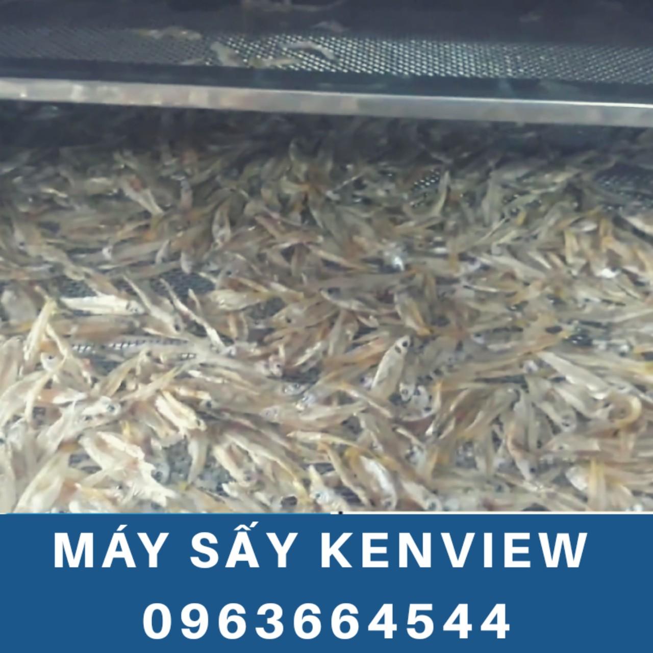 Kenview cung cấp máy sấy cá cơm ở Phan Rang - Máy sấy hải sản