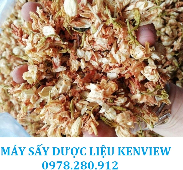 Kenview cung cấp máy sấy dược liệu, sấy hoa trà tại Lâm Đồng. 0978.280.912