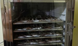 Kenview cung cấp máy sấy hải sản- sấy cá khô tại Sóc Trăng. 0978.280.912